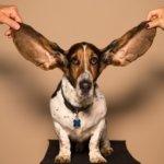 リスニングで音は聞こえるのに意味が理解できないとき【最初に】確認すべきポイント